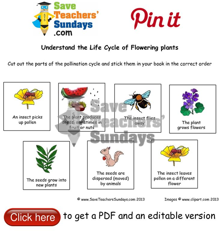 17 best year 3 plants lesson plans worksheets and teaching resources images on pinterest. Black Bedroom Furniture Sets. Home Design Ideas