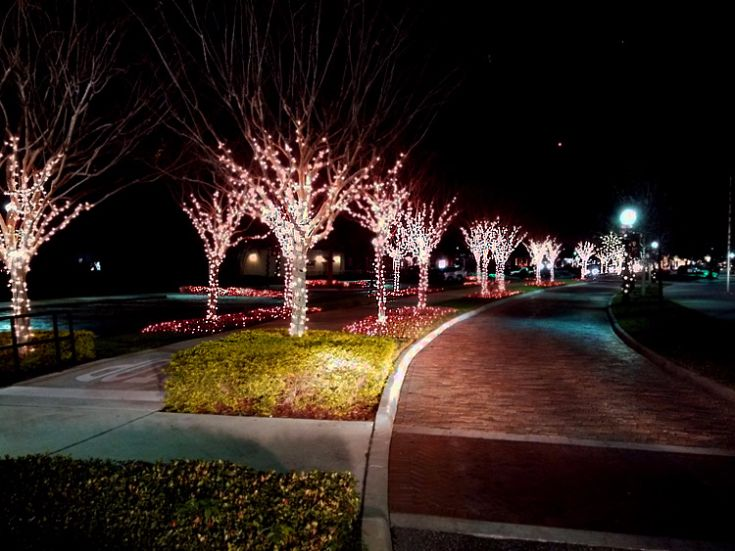 tree lighting ideas. miller lights decorating trees both inside and outside we love coming up with ideas for tree lighting g