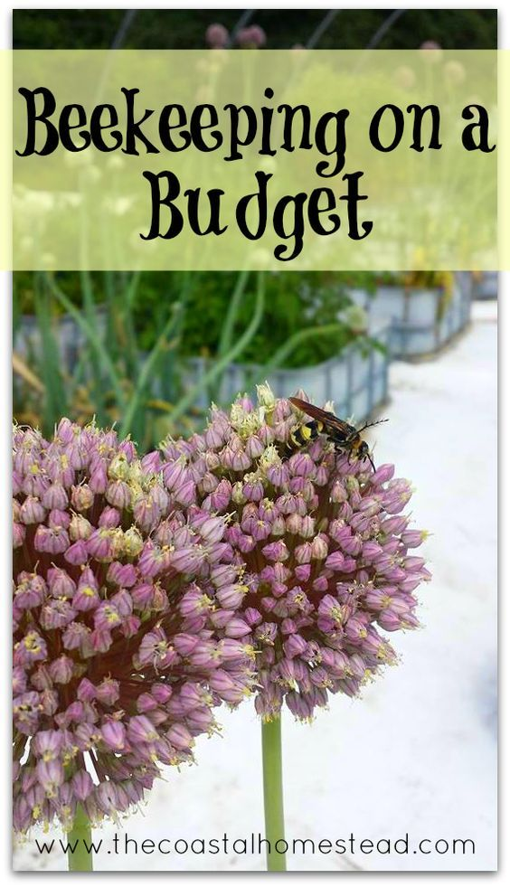 25+ Best Ideas about Beekeeping on Pinterest   Bees ...