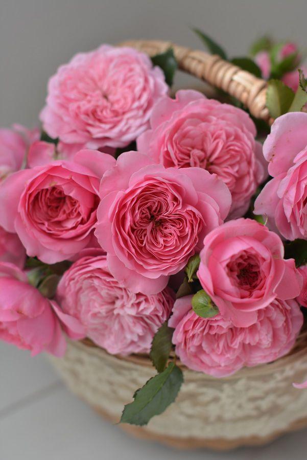 Rose De Mercerie-河本麻記子<紡...