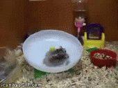 Hamster wheel gets intense… Funny hamsters, Cute