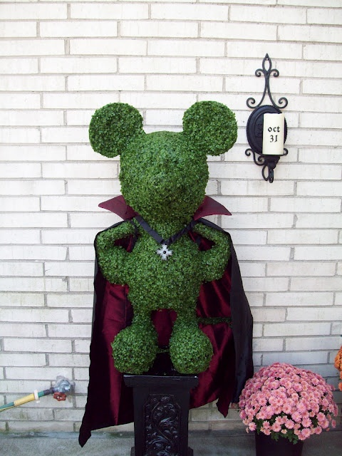 My Mickey Mouse topiary add dressed up for Halloween. Vampire Mickey! ºoº