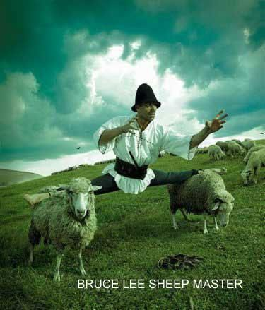 Master of Sheeps
