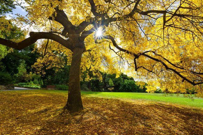 Simon Beedle, Autumn in Hobart,
