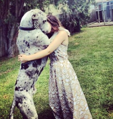 Nice 120+ Great Dane https://meowlogy.com/2017/04/02/120-great-dane/ If you suspect your dog is experiencing bloat, get it to your vet after possible. Your dog may begin whining when you get started getting ready for wo...