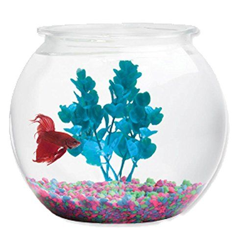183 best fish bowls images on pinterest aquarium fish for Beta fish bowl