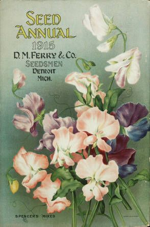 Seed annual / D.M. Ferry & Co. :: Nursery and Seed Catalogs