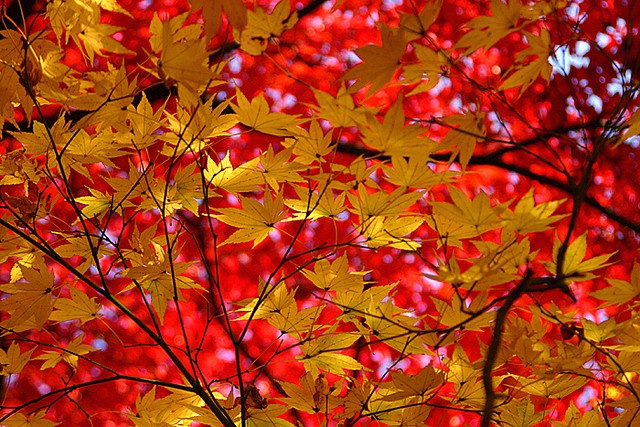 red & yellow by * Yumi *, via Flickr