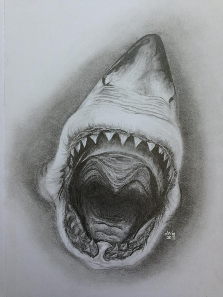 For #sharkweek Faber-Castell drawing pencils #shark #mouth ...