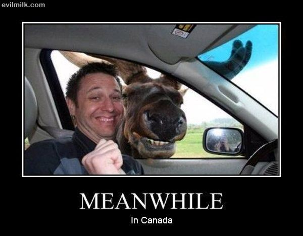 Love visiting my clients in Canada.  Have yet to see a smiling moose though...but I am hopeful