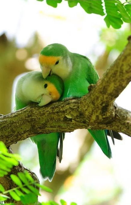 Beautiful birds, created before the animals that roamed the land!