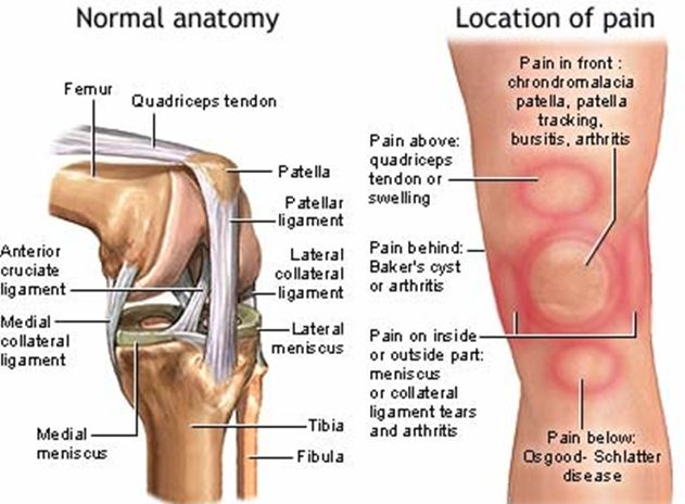 best 25+ ligament tear in knee ideas on pinterest | knee pain, Cephalic Vein