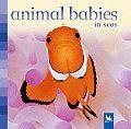Crías de animales del mar. Libro de fotografías con un pequeño texto en inglés. Publicado por Kingfisher. *En nuestra biblioteca.