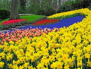 Amsterdam -- Keukenhof Tulip Gardens