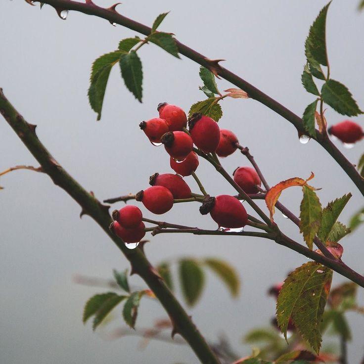 Samhain [soh-win] è la festa celtica che designa la fina della stagione del raccolto, l'origine del nome non è altro che il nome di Novembre stesso. Nei paesi di cultura gaelica era anche la marca dell'inverno, in questo periodo si cominciava a fare...