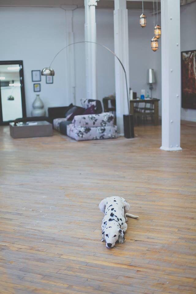 Loft. Dalmatien. Fay with love head office
