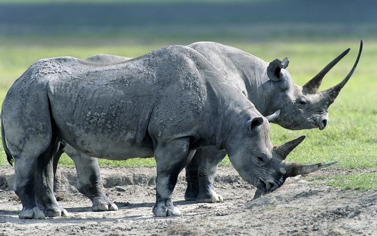 #1925922, rhino category - High Quality rhino picture
