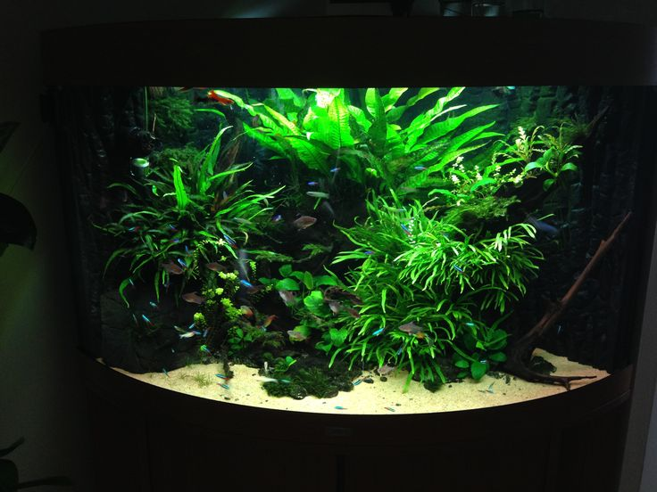 My Trigon tank