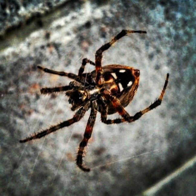 I do not like spiders but I love the beauty of nature!
