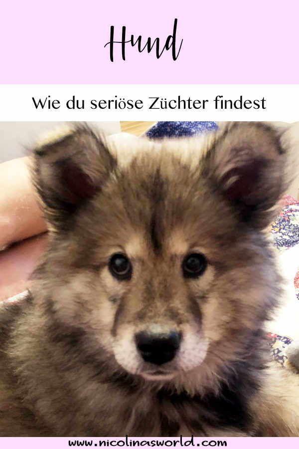 Wir Haben Einen Hund Marz Review Hunde Hundespruche Eurasier