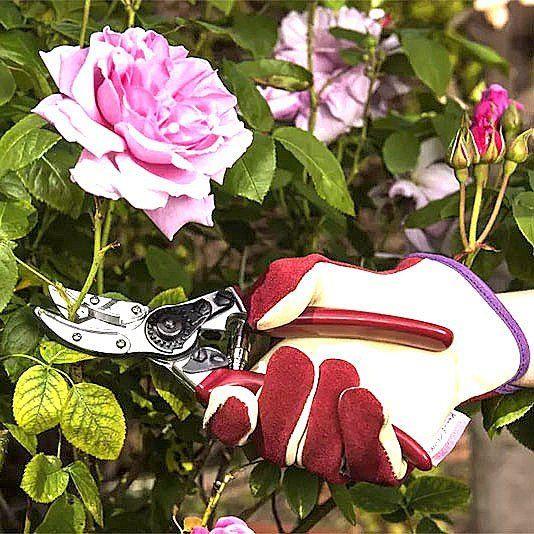 Skär-och hållsekatör Rose Cut and Hold är en sekatör med unik design där stjälken hålls kvar efter att den klippts av vilket gör efterarbetet mycket enklare. Perfekt för beskärning av rosor och buskar. Både sekatören och mocka-handskarna i fantastisk fin kvalitet finns att beställa i vår webbshop eller i inspirationsbutiken i Enhörna Södertälje.