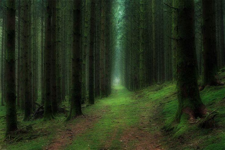Biomes - Landscape - Forested [JA]