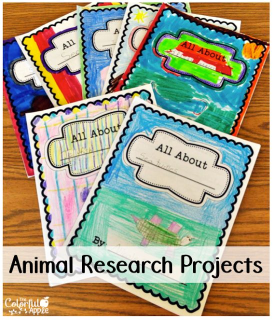 Project on animals and their homes