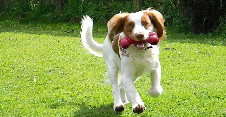 Cum dăunează câinele grădinii | Paradis Verde