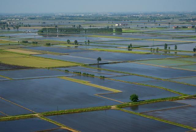 Tra Vercelli e Novara, nelle terre del riso - Viaggi