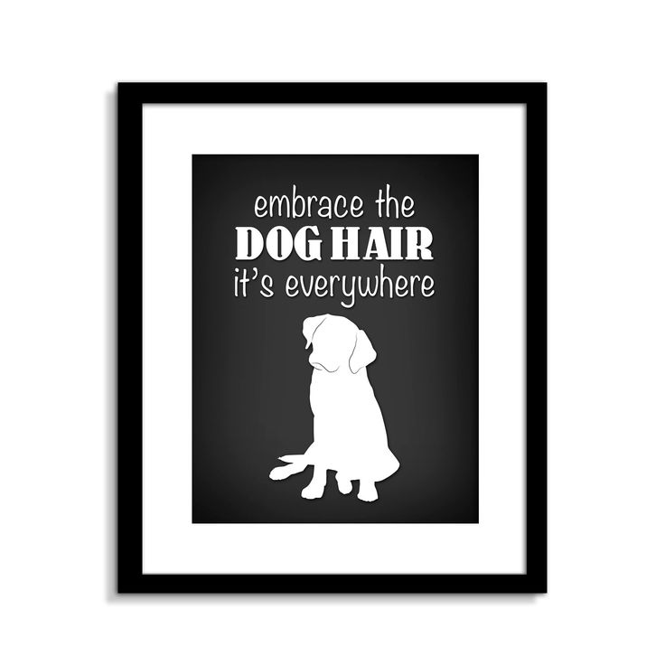 Funny Dog Wall Art Funny Dog Sign Embrace The Dog Hair Dog Wall Decor Dog Home Decor
