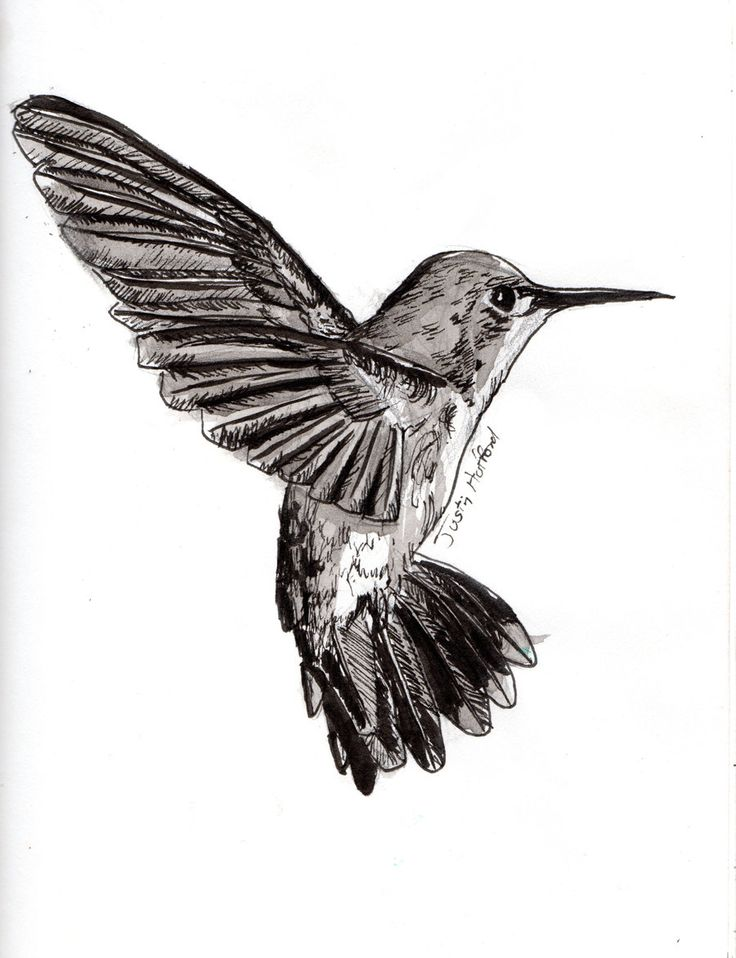 Hummingbird Drawings Step By Step: 19 Best Hummingbird/tattoo Research Images On Pinterest
