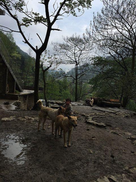 Guizhou, China http://www.actasia.org/ https://www.facebook.com/ACTAsiaForAnimals https://twitter.com/Tweet_ACTAsia https://www.youtube.com/user/ACTAsia1 http://www.oninstagram.com/profile/actasia https://www.linkedin.com/company/actasia-for-animals http://actasia.tumblr.com/