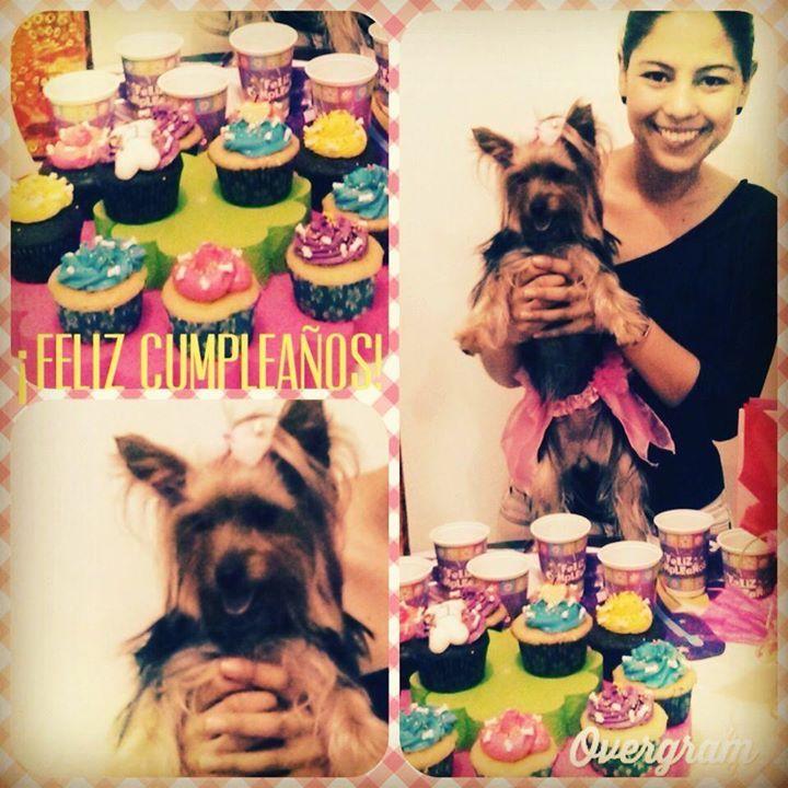 Lola cumplió 1 añito!!! Felicidades Lola en tu día. Cumpleaños perruno al estilo CHEZ MUA! #Cupcakes #Dogs #Puppy