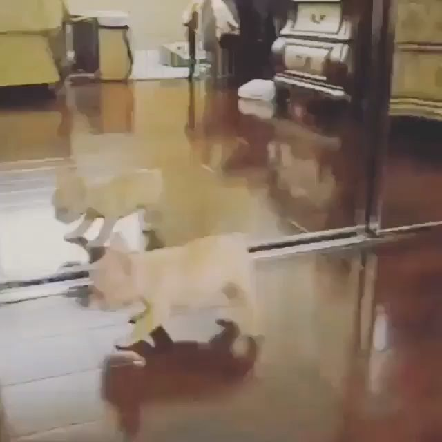 Cute Puppy Vs Mirror Boy Cute Mirror Puppy Cute Baby