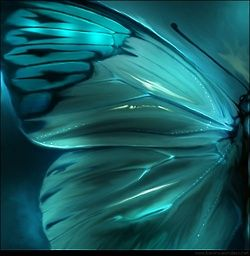 Teal / Aqua Butterfly Wing