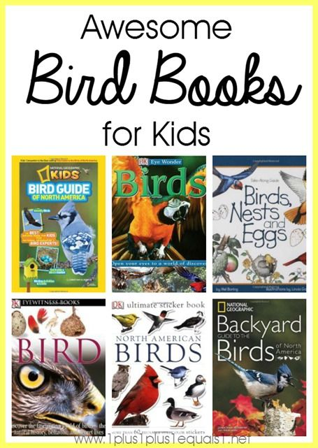 preschool bird books 21 best images about thematic unit birds on 170
