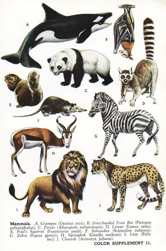 10 best vintage images on Pinterest  Animals Botanical
