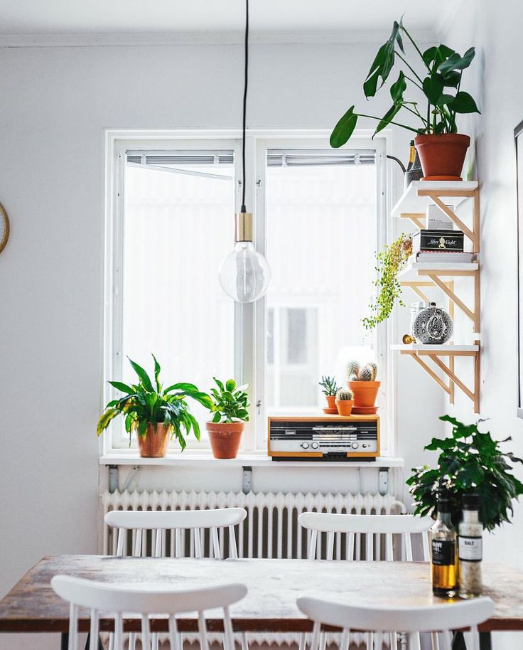 bright white home made even brighter with terracotta pots and green plants