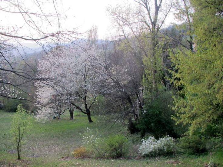 Radura dei ciliegi - Casoncello/Loiano
