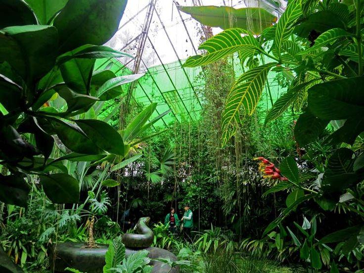 17. Ambiente amazónico, un lugar que simula las condiciones de la selva húmeda tropical del Paleoceno.