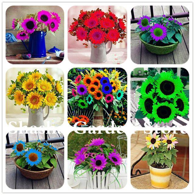 Rare Purple Mini Sunflower Bonsai Helianthus Annuus Flower Plant Courtyard Flower Pots Planting Flowers Mini Sunflowers