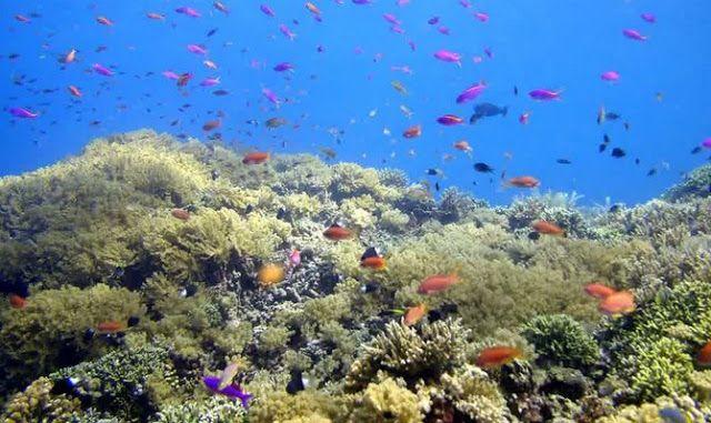 Bunaken National Park - Popular Natural Attractions in Indonesia