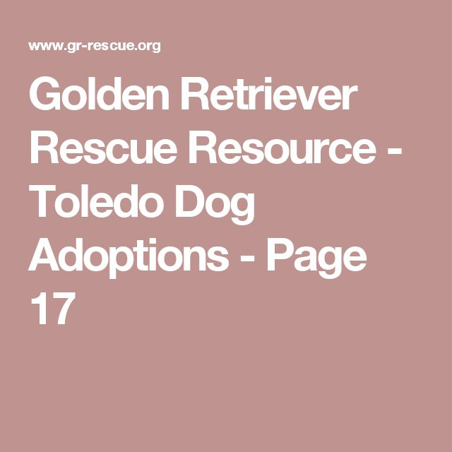 Golden Retriever Rescue Resource - Toledo Dog Adoptions - Page 17
