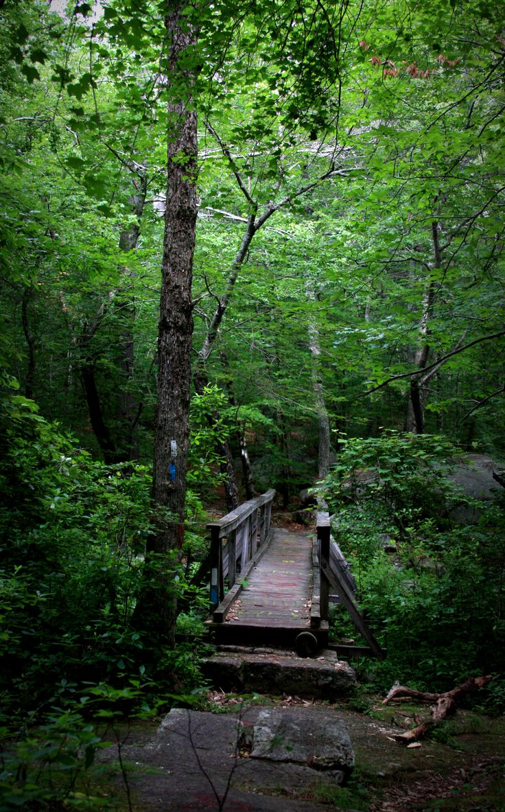 Date idea: Hiking on the Ben Utter Trail to Stepstone Falls, Rhode Island. Perfect summer idea to do in New England.