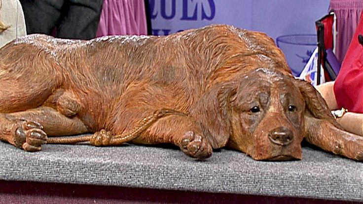 Check out Anne Igelbrink's ANTIQUES ROADSHOW appraisal of this Black Forest Carved Dog, ca. 1905 from Des Moines, Hour 1!