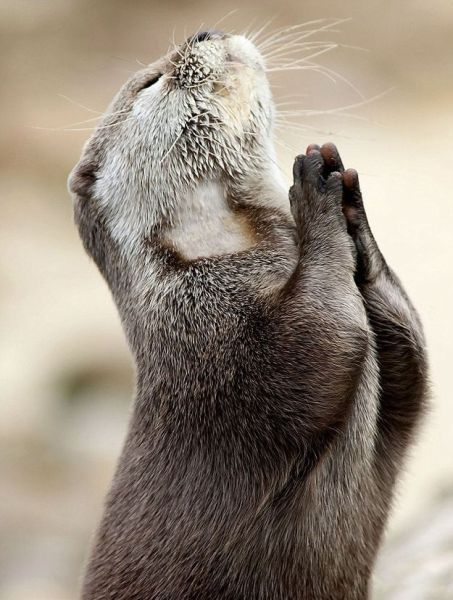 I say a little prayer for you