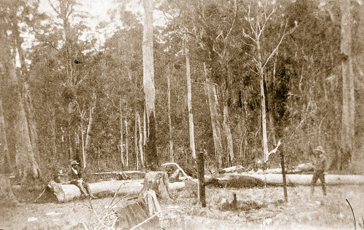 Site of the Stringybark Creek gunfight, taken by a photographer by the name of Burman a week after the police killings. Locals represent, from left, Ned Kelly, Thomas McIntyre and Michael Kennedy. Due to the number of times McIntyre would perjure himself up to, and including, Ned Kelly's trial, the positions are very rough estimations.