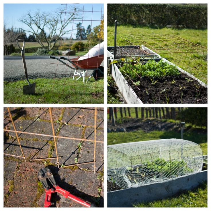 Make a simple cloche from concrete reinforcing mesh and netting to keep the birds and bunnies off your crops.