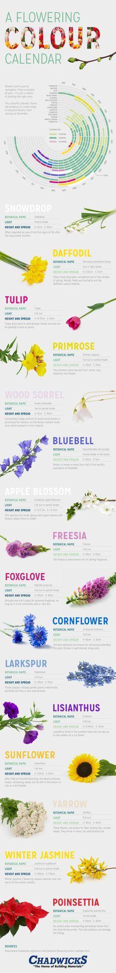kleurrijke bloementuin het hele jaar rond