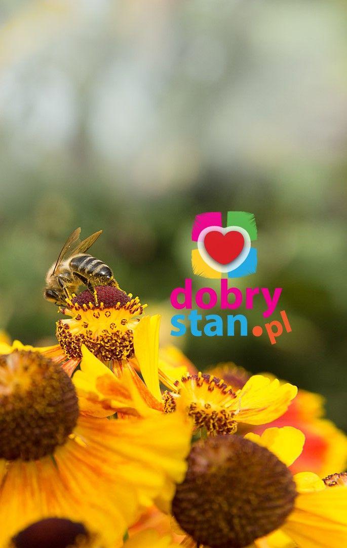 Dobra Pszczola Amazing